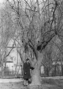 """1980 год, май. Наше дерево ещё хранит """"тайны""""..."""
