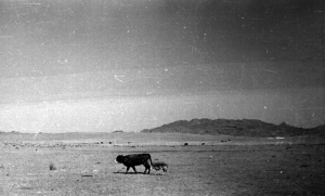 Чойрын овоо  -  Чойр - гора, как её называли русские. И...  степь центральной Монголии.