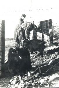 """""""Паломница"""" Юля на свидании с Машей. Зима 1984 года, Улан-Батор."""